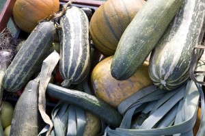 Marrows and pumpkins