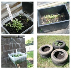Food containers, tyres... you can grow food in anything
